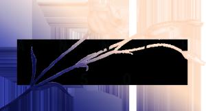 A50_logo_menu-open